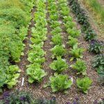 Organik Bahçecilik Fikirleri 56