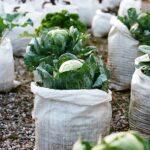 Organik Bahçecilik Fikirleri 58