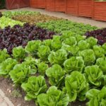 Organik Bahçecilik Fikirleri 5