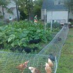 Organik Bahçecilik Fikirleri 61