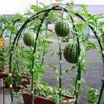 Organik Bahçecilik Fikirleri 64