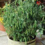 Organik Bahçecilik Fikirleri 65