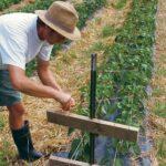 Organik Bahçecilik Fikirleri 66