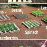 Organik Bahçecilik Fikirleri 6