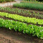 Organik Bahçecilik Fikirleri 69