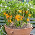 Organik Bahçecilik Fikirleri 70