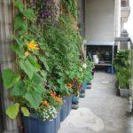 Organik Bahçecilik Fikirleri 72