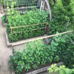 Organik Bahçecilik Fikirleri 75