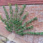 Organik Bahçecilik Fikirleri 76