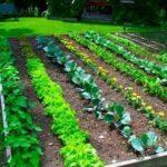 Organik Bahçecilik Fikirleri 77