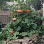 Organik Bahçecilik Fikirleri 78