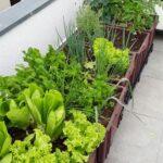 Organik Bahçecilik Fikirleri 7