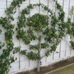 Organik Bahçecilik Fikirleri 79