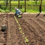 Organik Bahçecilik Fikirleri 81