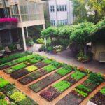 Organik Bahçecilik Fikirleri 83
