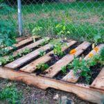 Organik Bahçecilik Fikirleri 84