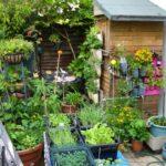 Organik Bahçecilik Fikirleri 86
