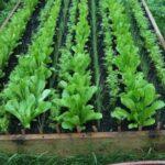 Organik Bahçecilik Fikirleri 88