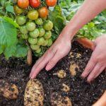 Organik Bahçecilik Fikirleri 8