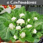 Organik Bahçecilik Fikirleri 91