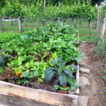 Organik Bahçecilik Fikirleri 97