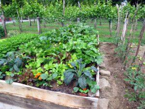 Organik Bahçecilik Fikirleri