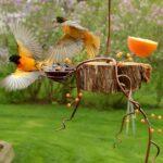 Kuş Yemliği Nasıl Yapılır? 11