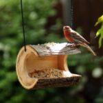 Kuş Yemliği Nasıl Yapılır? 16