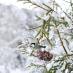 Kuş Yemliği Nasıl Yapılır? 17