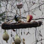 Kuş Yemliği Nasıl Yapılır? 1