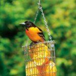 Kuş Yemliği Nasıl Yapılır? 27