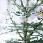 Kuş Yemliği Nasıl Yapılır? 41