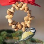 Kuş Yemliği Nasıl Yapılır? 61