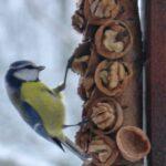 Kuş Yemliği Nasıl Yapılır? 80