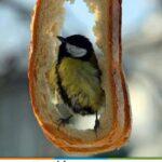 Kuş Yemliği Nasıl Yapılır? 8