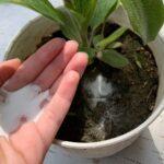 Bitkilerde Karbonat Kullanmanın Faydaları 1