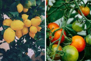 Gıda Atıklarının Değerlendirilmesi 3