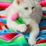 Kaktüs Kedi Oyuncağı Yapımı 13