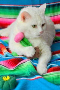Kaktüs Kedi Oyuncağı Yapımı