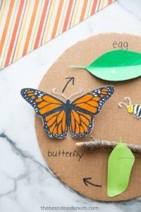 Kelebeğin Yaşam Döngüsü Okul Öncesi