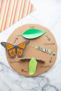 Kelebeğin Yaşam Döngüsü Okul Öncesi 2