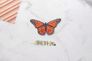 Kelebeğin Yaşam Döngüsü Okul Öncesi 4