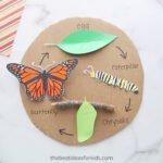 Kelebeğin Yaşam Döngüsü Okul Öncesi 5