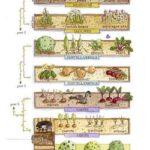 Sebze Bahçesi Nasıl Düzenlenir? 16