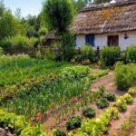 Sebze Bahçesi Nasıl Düzenlenir? 17