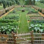 Sebze Bahçesi Nasıl Düzenlenir? 18