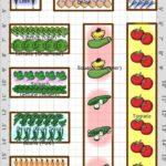 Sebze Bahçesi Nasıl Düzenlenir? 1