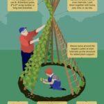 Sebze Bahçesi Nasıl Düzenlenir? 19