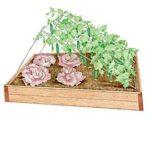 Sebze Bahçesi Nasıl Düzenlenir? 20