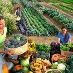 Sebze Bahçesi Nasıl Düzenlenir? 23